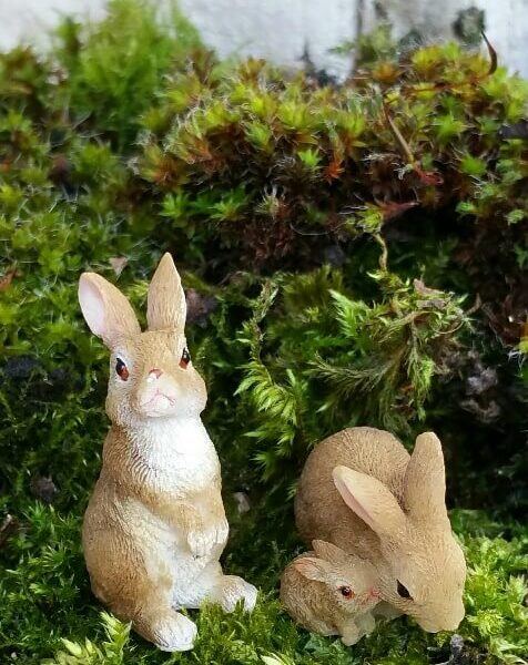 MW04-012-rabbit-family