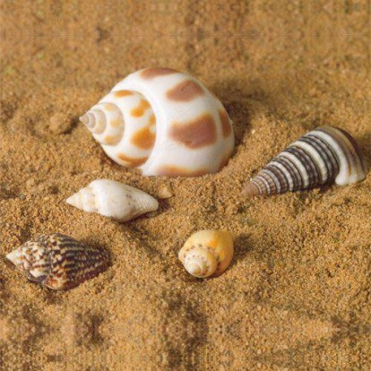 Sea Shells, 5 pcs Dolls House Emporium-5525